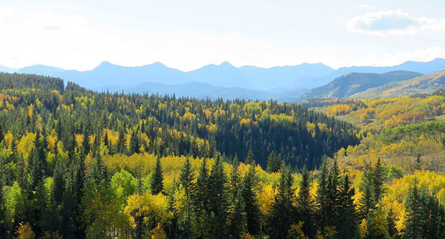 Alberta's forest industries focus of new U of A research chair