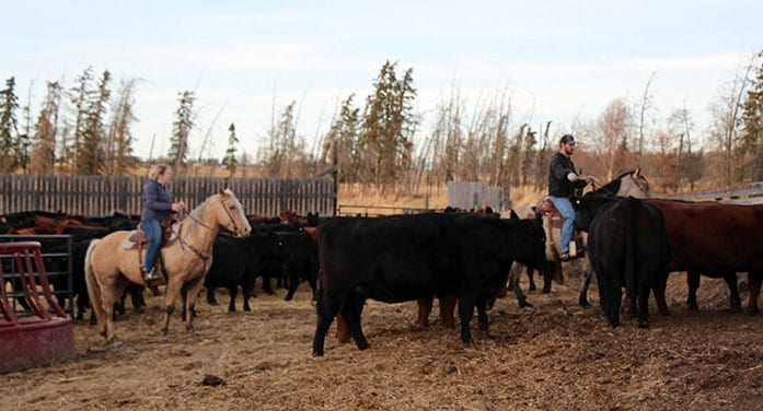 Students get virtual taste of real-world life on the farm